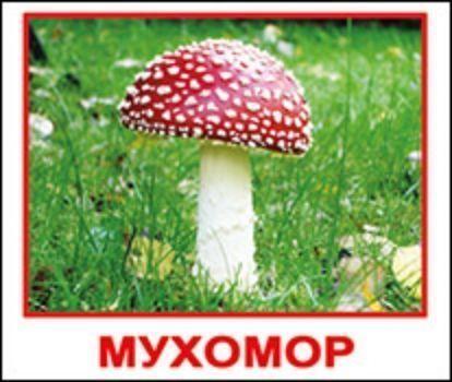 Набор обучающих мини-карточек ГрибыНачальная школа<br>Комплект содержит 20 карточек с изображениями грибов, с подписями на русском языке. Просмотр таких карточек позволяет ребенку быстро усвоить тему грибы, запомнить как пишутся слова, развивает у него интеллект и формирует фотографическую память.Рекоменду...<br><br>Год: 2015<br>Высота: 84<br>Ширина: 100<br>Толщина: 8