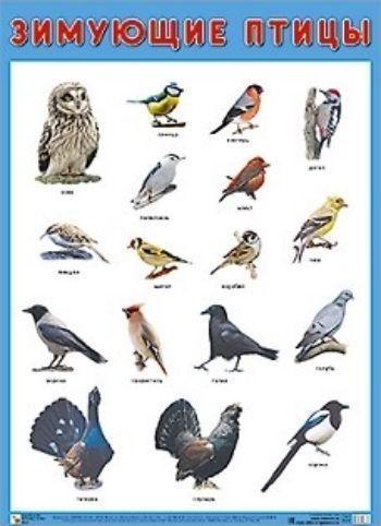 Плакат Зимующие птицыЗанятия с детьми дошкольного возраста<br>Плакат большого формата Зимующие птицы познакомит детей с птицами, которые с наступлением холодов не улетают в теплые страны, а остаются зимовать на территории нашей страны. Четкие, яркие фотографии обязательно заинтересуют ребят и помогут быстро выучит...<br><br>Год: 2018<br>ISBN: 978-5-4315-0883-7<br>Высота: 690<br>Ширина: 500<br>Толщина: 1