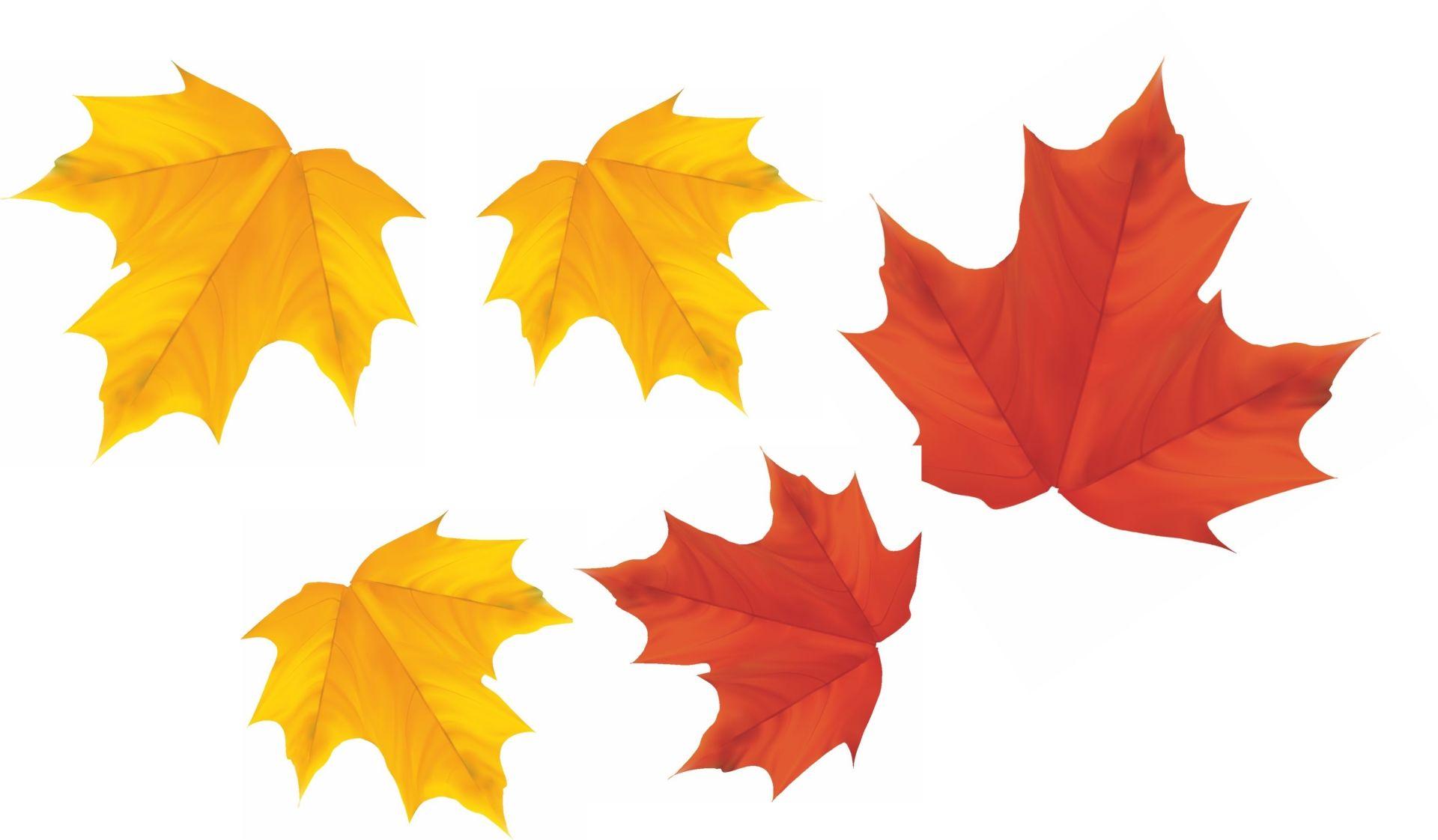 Мини-плакат вырубной  Листья (5 видов листьев по 10 шт.): упаковка 50 шт.Вырубные фигуры<br>.<br><br>Год: 2017<br>Серия: Вырубные фигуры для оформления