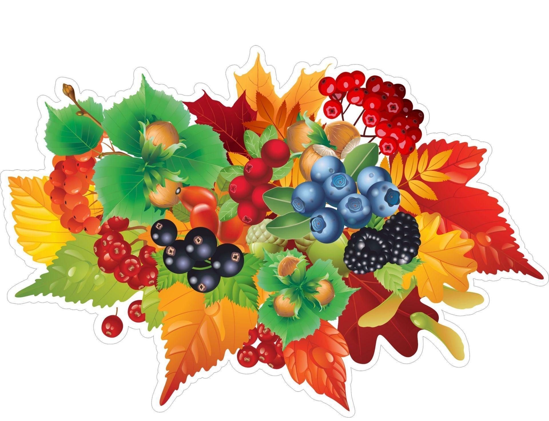 Плакат вырубной Орехи и ягоды: 360х243 ммВырубные фигуры<br>.<br><br>Год: 2017<br>Серия: Вырубные фигуры для оформления<br>Высота: 243<br>Ширина: 360<br>Переплёт: набор