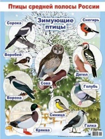 Плакат Зимующие птицыОформительские плакаты<br>Обучающий и яркий плакат на большом формате поможет вашему ребенку выучить виды зимующих птиц.<br><br>Год: 2017<br>Высота: 600<br>Ширина: 440<br>Толщина: 1