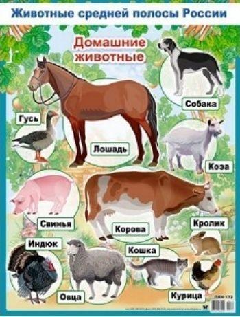 Плакат Домашние животныеОформительские плакаты<br>Обучающий и яркий плакат на большом формате поможет вашему ребенку выучить виды домашних животных.<br><br>Год: 2017<br>Высота: 600<br>Ширина: 440<br>Толщина: 1