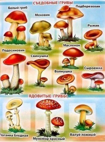Плакат ГрибыТематические плакаты<br>Обучающий плакат Грибы поможет вашему ребенку не просто запомнить изображения, названия или характерные особенности грибов, но и укажет вам направление для бесед, совместной деятельности и развития малыша (его речи, мышления, памяти).Формат А3.Материал:...<br><br>Год: 2018<br>Высота: 580<br>Ширина: 440<br>Толщина: 1