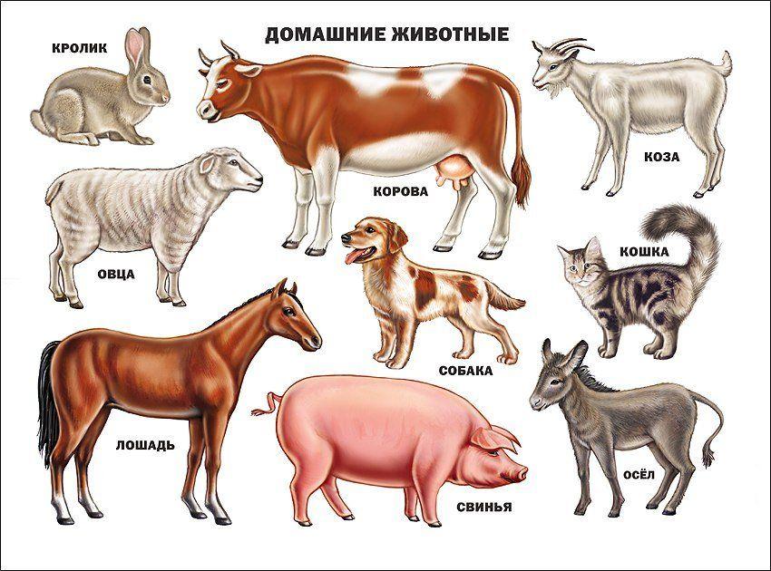 Плакат Домашние животныеОформительские плакаты<br>Красочно иллюстрированные плакаты помогут вашему ребенку получить основные понятия об окружающем мире.Формат А2.Материал: картон.<br><br>Год: 2017<br>Высота: 500<br>Ширина: 660<br>Толщина: 1