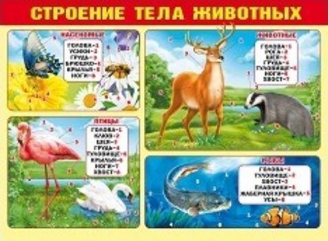 Плакат Строение тела животныхУчащимся и абитуриентам<br>Обучающий плакат в удобной и наглядной форме познакомит ребенка со строением различных животных.Формат А2. Материал: картон.<br><br>Год: 2017<br>Высота: 440<br>Ширина: 600<br>Толщина: 1
