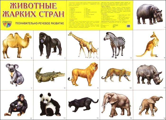 Плакат Животные жарких странОформительские плакаты<br>Демонстрационный материал в виде плаката обязательно пригодится для развития ребенка дома, в дошкольном учреждении или школе. Данный плакат расскажет о животных жарких стран.Благодаря красочным картинкам вам будет удобно объяснять конкретные термины или д...<br><br>Год: 2018<br>Высота: 490<br>Ширина: 690<br>Толщина: 1