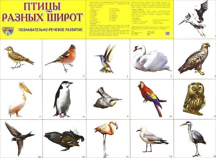 Плакат Птицы разных широтОформительские плакаты<br>Демонстрационный материал в виде плаката обязательно пригодится для развития ребенка дома, в дошкольном учреждении или школе. Данный плакат расскажет о птицах.Благодаря красочным картинкам вам будет удобно объяснять конкретные термины или даже составлять ...<br><br>Год: 2018<br>Высота: 490<br>Ширина: 690<br>Толщина: 1