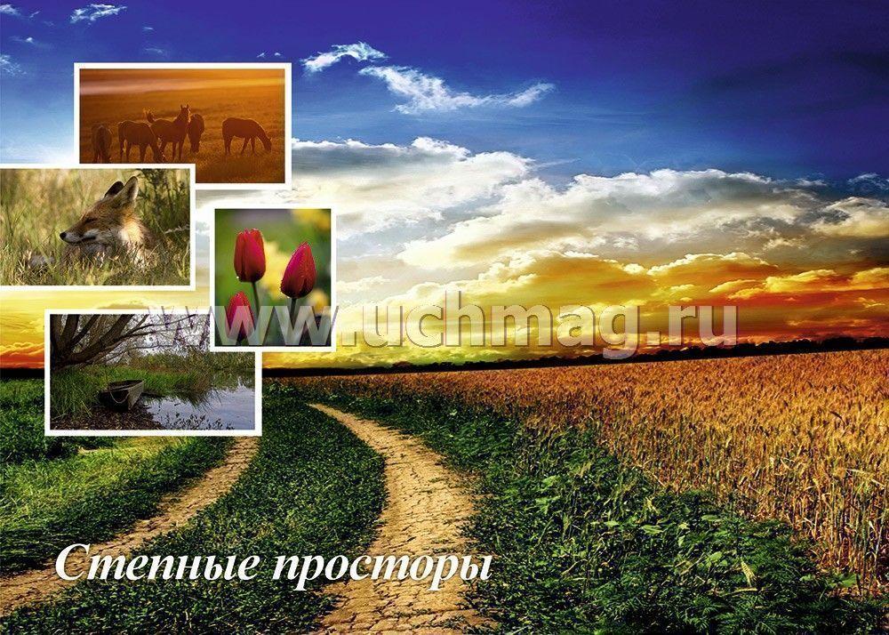 Пчела  картинки для детей  Картинки Detkitoday
