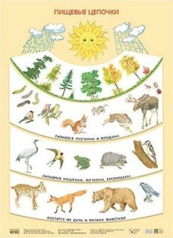 Плакат Пищевые цепочки