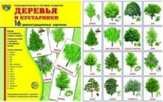 Картинки для детей деревья и кустарники, марта женщинам стихах