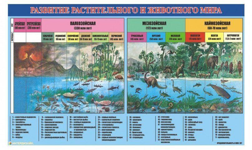 """Плакат виниловый """"Развитие растительного и животного мира"""""""