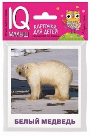 Животные полярных широт. Набор карточек для детей. IQ-малыш