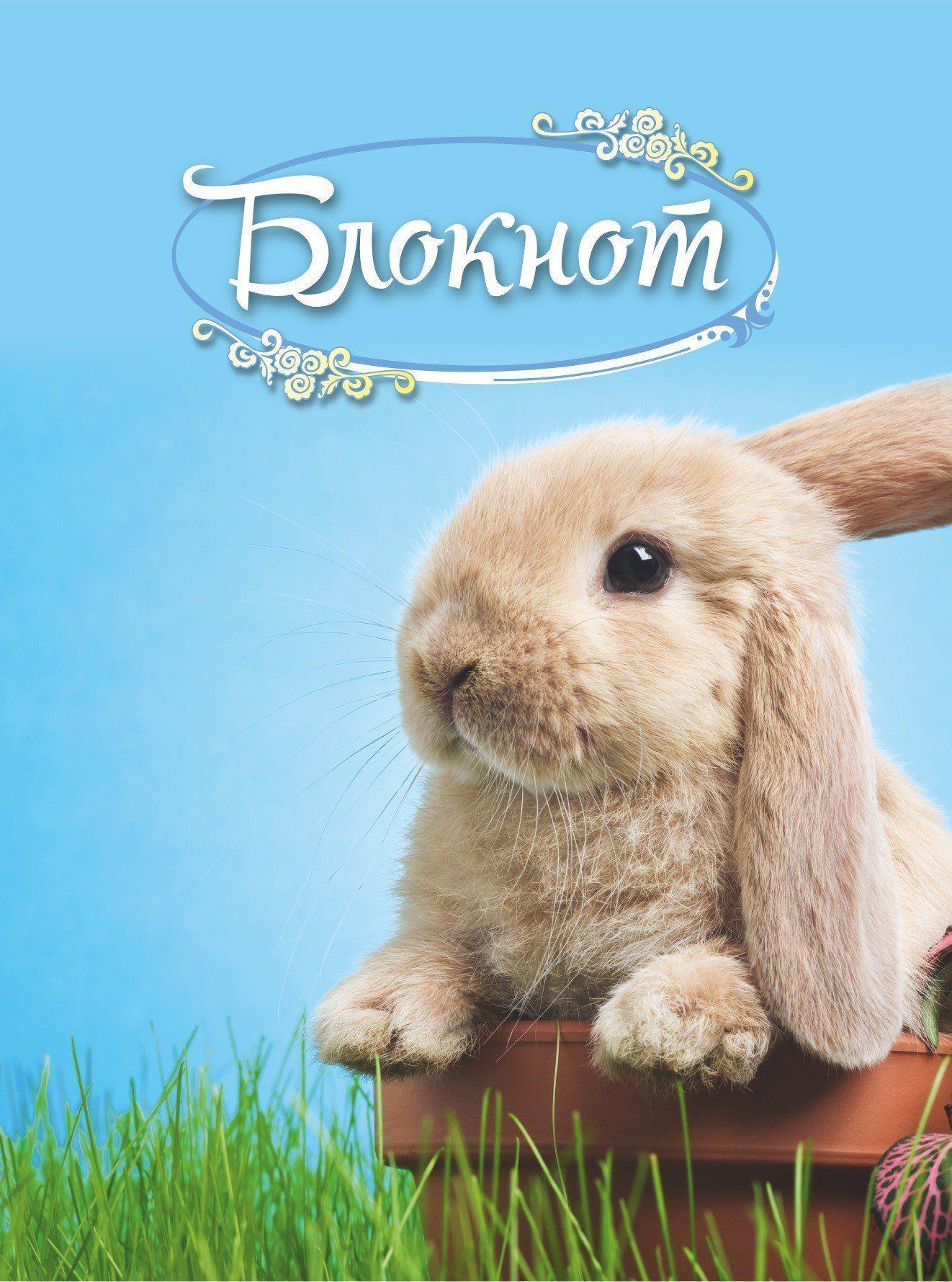 Блокнот (с изображением кролика)