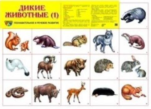 Плакат Дикие животные 1Оформительские плакаты<br>Демонстрационный материал в виде плаката обязательно пригодится для развития ребенка дома, в дошкольном учреждении или школе. Данный плакат расскажет о диких животных.Благодаря красочным картинкам вам будет удобно объяснять конкретные термины или даже сос...<br><br>Год: 2018<br>Высота: 490<br>Ширина: 690<br>Толщина: 1