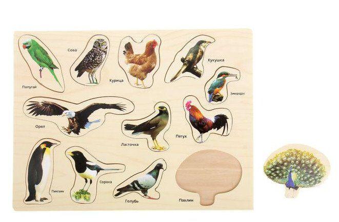 Рамка-вкладыш Мир птиц