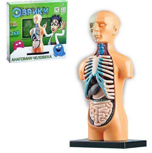 """Научный опыт """"Анатомия человека"""""""