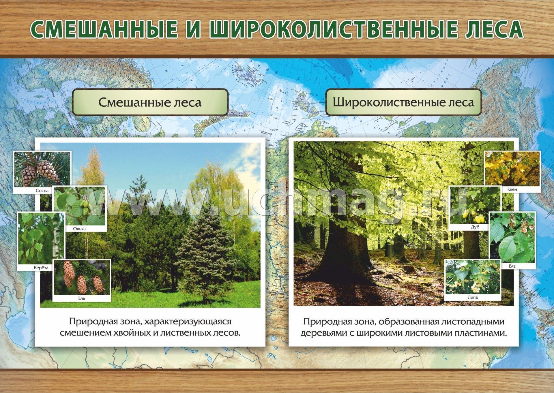 такое смешанные и широколиственные леса евразии характеристика публикацией