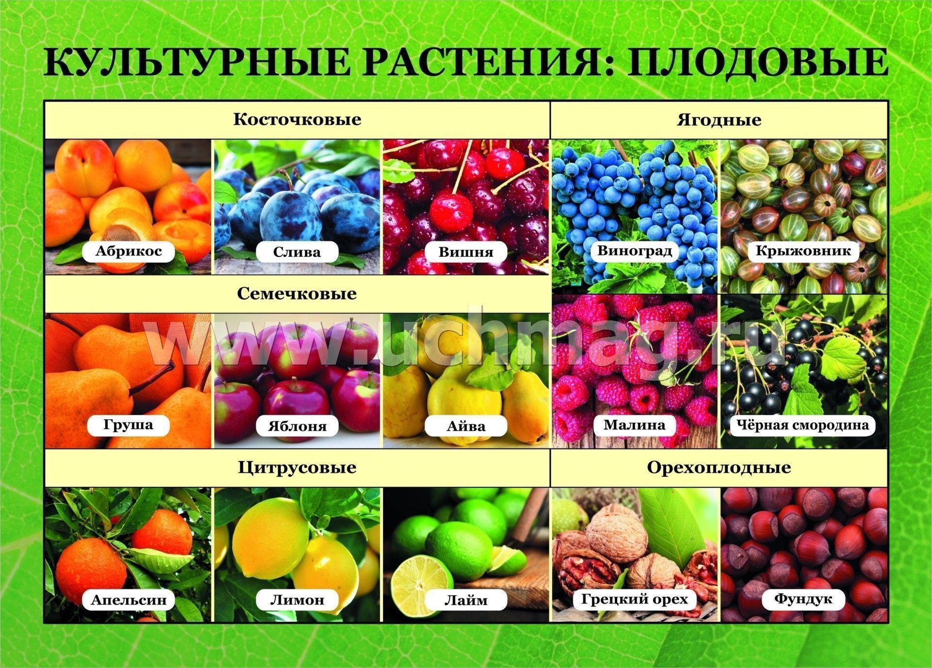 культурные растения разного назначения